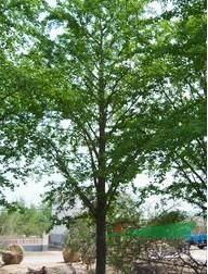 邳州市长青园苗木种植专业合作社