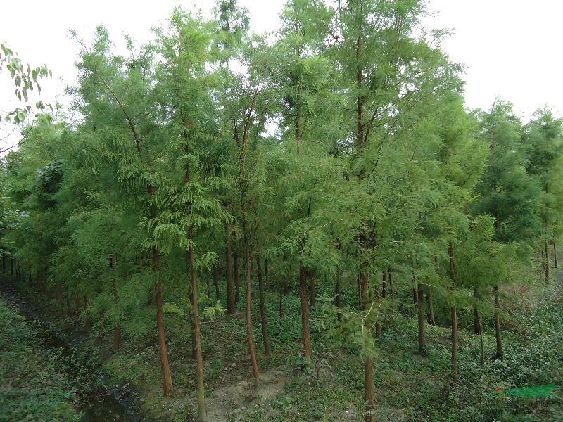 江蘇吳江綠樹緣園藝場