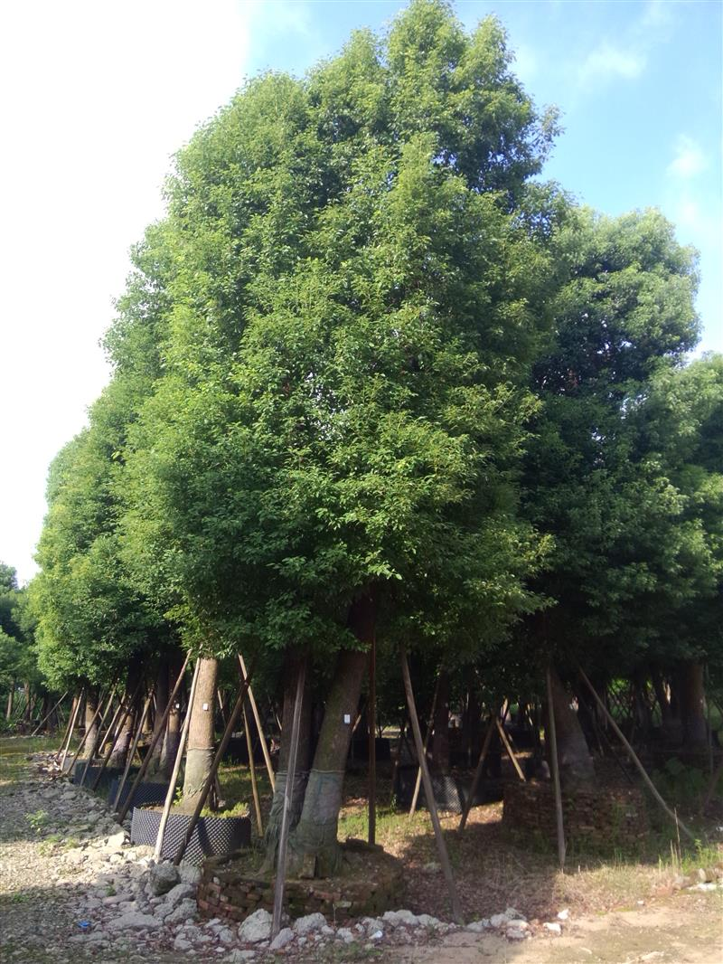 长兴广兴苗木场