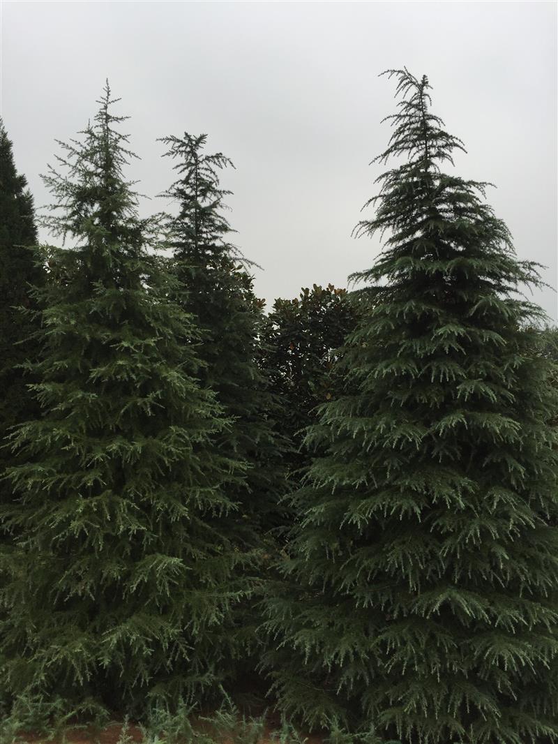 南京年福苗圃