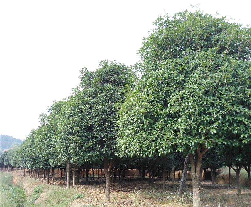 武汉楠枫林生态园林工程有限公司