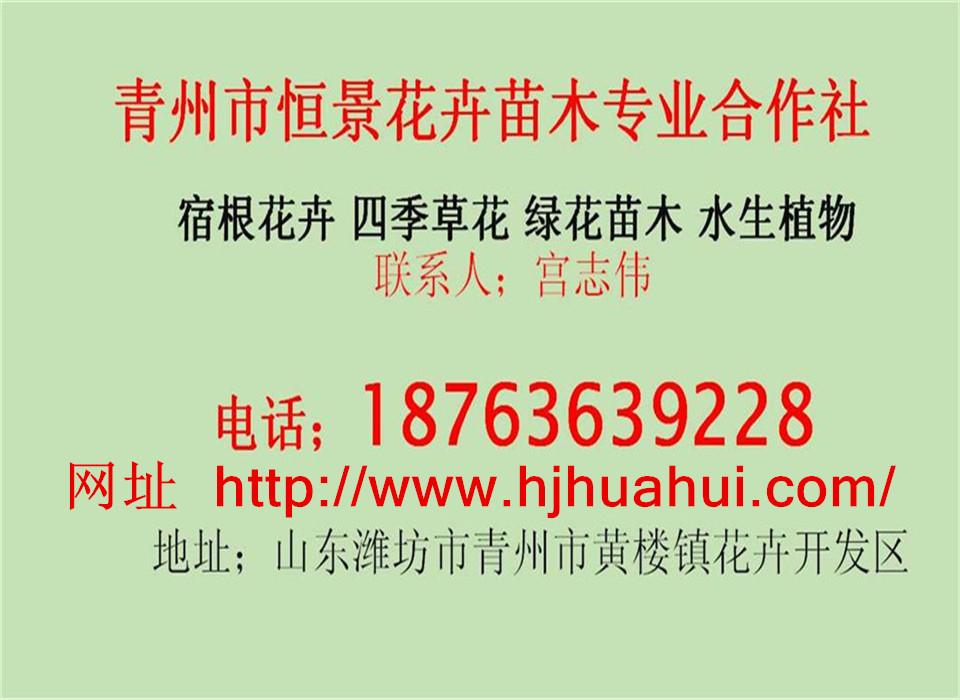青州市恒景花卉快乐赛车玩法专业合作社