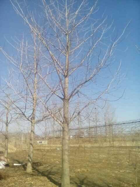 凤城市盛茂苗木种植专业合作社