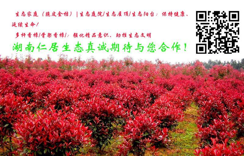湖南仁居生态园林养护工程有限公司