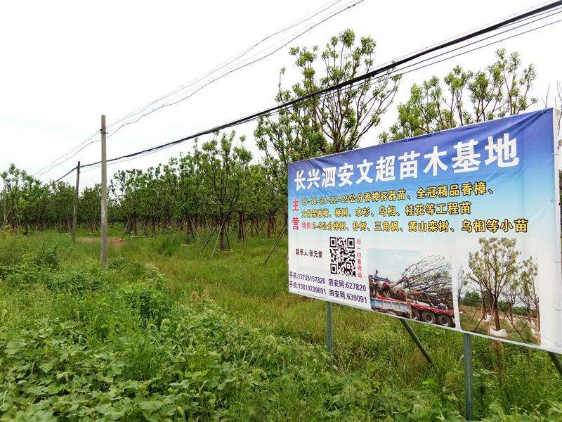长兴泗安文超苗木场