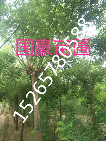 嘉祥县国豪苗木种植中心