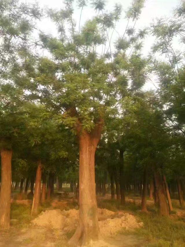郓城县嘉通绿化苗木种植场