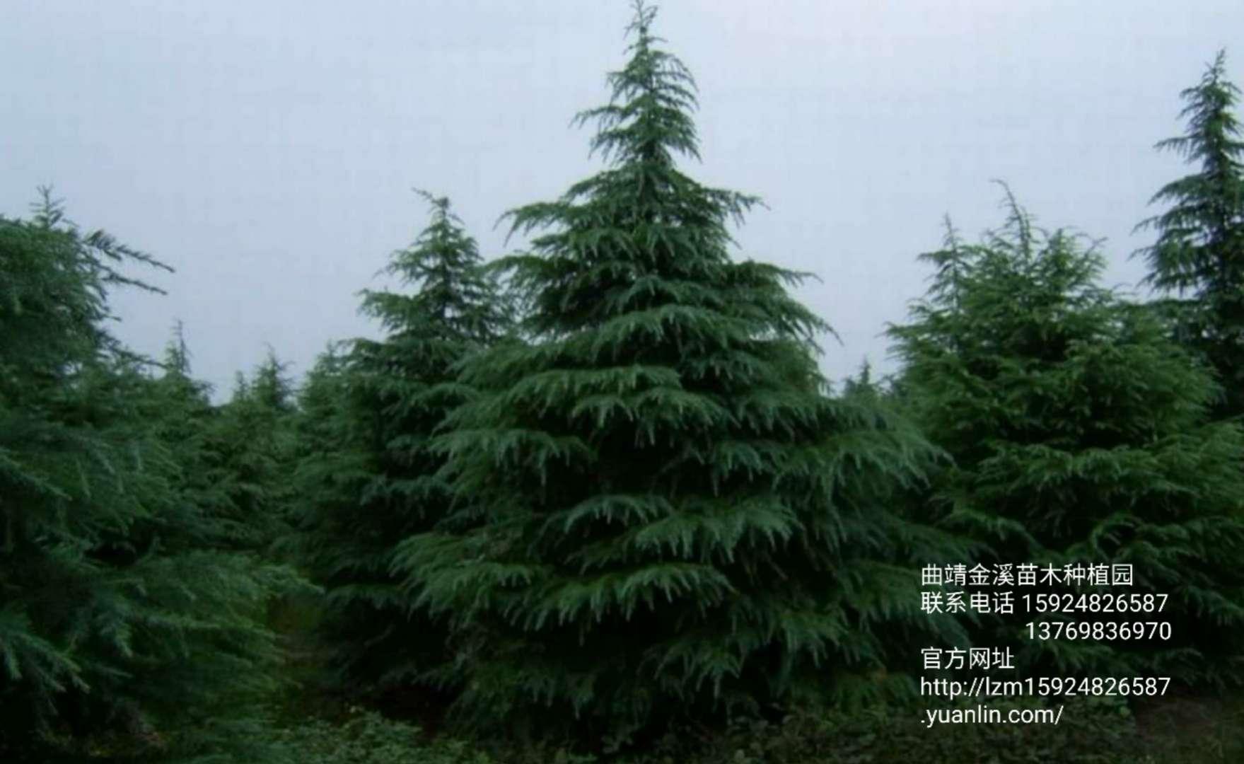 曲靖金溪苗木种植园