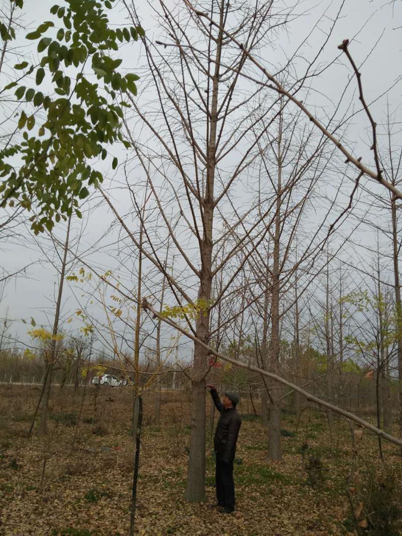 临沂木森园林绿化有限公司