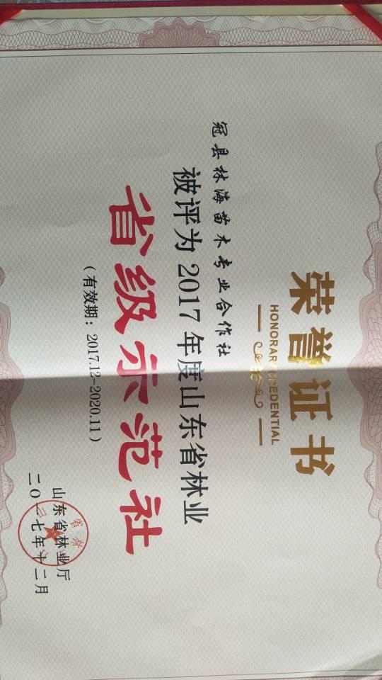 冠县林海苗木专业合作社