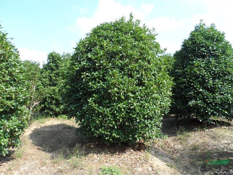 上海好苗多树木配送中心基地 - 全国园林苗圃top50