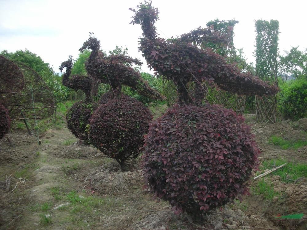 中华树艺园