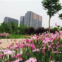 河南江海园林绿化产业有限责任公司