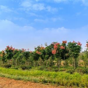 山东兴润园林生态股份有限公司