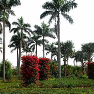 海南金棕榈园艺景观有限公司