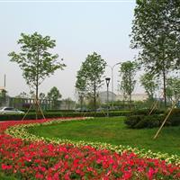 太和县城关镇景观绿化工程