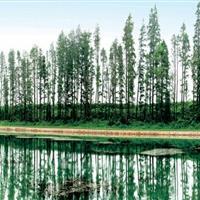 太湖湿地生态修复和保护示范工程
