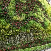 温州巽山公园垂直绿化墙