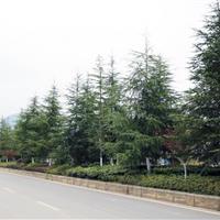 机场迎宾大道道路绿化项目