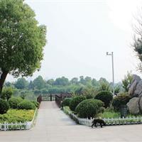 徐州市湖西路绿化景观提升BT工程