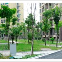 受降银湖花苑室外绿化工程1
