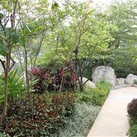 东莞万科橖越园林绿化工程