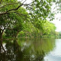 深圳东湖公园绿地管理养护