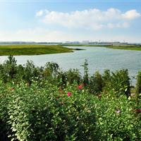 济宁北湖景区起步区园林绿化工程