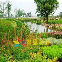 公园绿化案例