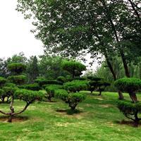 济南绿地实验中学绿化项目