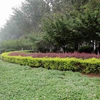 山东省309国道绿化项目