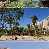新乡市和谐公园