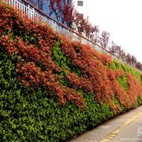 """株洲""""双龙戏响石""""植物墙"""
