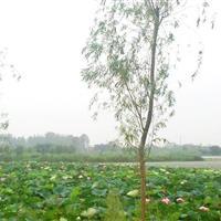 """江苏·南通""""水韵里下河""""湿地公园"""