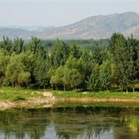 石家庄市滹沱河生态开发整治工程汊河整治一期跌水区景观绿化工程C标段