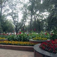 张家口市人民公园绿化