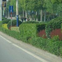 道路园林工程