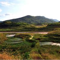 白夹溪消落带湿地基塘及林泽工程