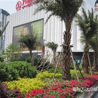 福州万达广场景观绿化工程