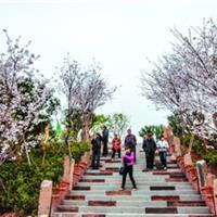 永福樱花主题公园