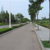珠江路绿化工程