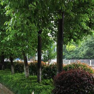 湖南景然园林发展有限公司